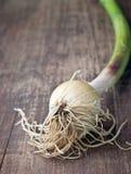 Un gruppo della cipolla verde Immagini Stock