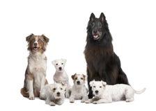 Un gruppo di 5 cani Fotografia Stock