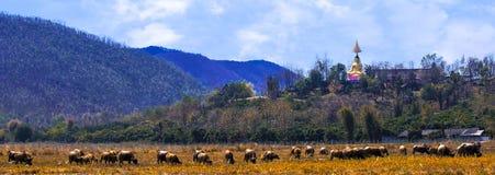 Un gruppo di bufalo Fotografie Stock Libere da Diritti