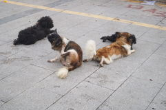 Un gruppo di cani Immagine Stock