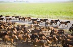 Un gruppo di cavalli Fotografie Stock Libere da Diritti