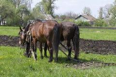 Un gruppo di due cavalli con un erpice da lavorare nel campo Fotografie Stock