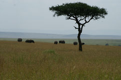 Un gruppo di elefanti Fotografia Stock
