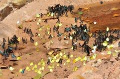 Un gruppo di farfalle Fotografie Stock Libere da Diritti