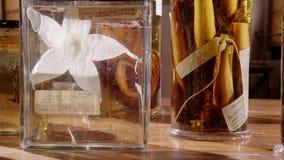 Un gruppo di fiori fossilizzati in bottiglie di vetro fotografia stock