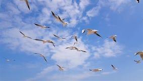 Un gruppo di gabbiani vola contro il vento, cielo nei precedenti archivi video