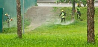 Un gruppo di lavoratori municipali pubblici in uniformi verde chiaro e di maschere che falciano erba in un parco con le falciatri fotografia stock