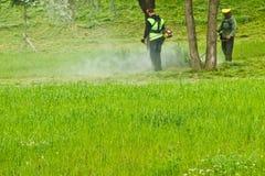 Un gruppo di lavoratori municipali pubblici in uniformi verde chiaro e di maschere che falciano erba in un parco con le falciatri immagine stock