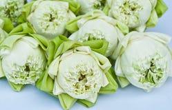 Un gruppo di loto bianco Immagini Stock