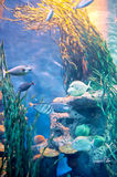 Un gruppo di pesci di alto mare Immagini Stock