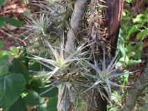 Un gruppo di piante di aria Fotografia Stock