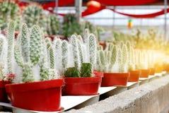 Un gruppo di succulente del cactus in vaso in una fila Fotografie Stock