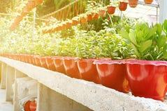 Un gruppo di succulente del cactus in vaso in una fila Fotografie Stock Libere da Diritti