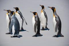 Un gruppo sei di re Penguins sulla spiaggia Immagine Stock