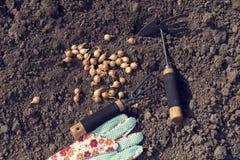 Un guante que cultiva un huerto y dos herramientas que cultivan un huerto en la tierra Fotografía de archivo libre de regalías