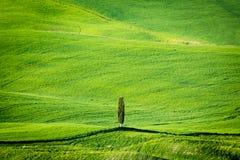 Un héroe en Toscana Fotografía de archivo