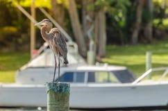 Un héron devant le bateau Photo libre de droits