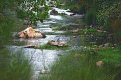 Un héron en rivière image stock