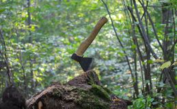 Un hacha en el bosque Fotos de archivo libres de regalías