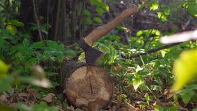 Un hacha en el bosque Foto de archivo libre de regalías