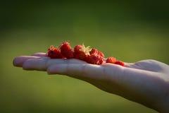 Un Handfull delle fragole Fotografie Stock