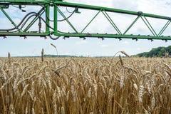 Un haut-dégagement, pulvérisateur moderne au-dessus du champ de blé image libre de droits