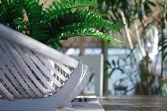 Un helecho verde falso en un pote azul y blanco se sienta en una cesta del bastón en una mesa de comedor de madera fotografía de archivo