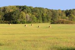 Un henar temprano del otoño Foto de archivo libre de regalías
