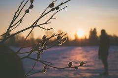 Un heraldo de la primavera Fotografía de archivo