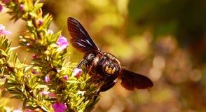 Un heureux gaffe l'abeille Image stock