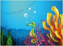 Un hippocampe près des récifs coraliens Photographie stock libre de droits