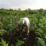 Un hombre africano joven unidintified que trabaja en el campo imagenes de archivo