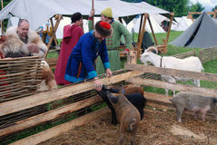 Un hombre alimenta cerdos del bebé Imágenes de archivo libres de regalías