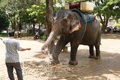Un hombre con un elefante en Wat Phnom, Phnom Penh, Camboya Foto de archivo libre de regalías