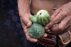 Un hombre con una carrera agrícola está sosteniendo tres pepinos Su mano Foto de archivo