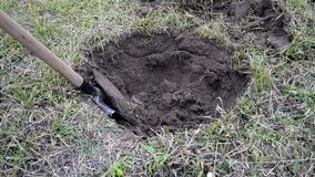 Un hombre con una pala está cavando un agujero en la tierra, quitando la capa de la hierba Excavación de la tierra con una pala almacen de metraje de vídeo