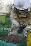 Un hombre en el traje de la abeja, arriba a la colmena fotos de archivo libres de regalías
