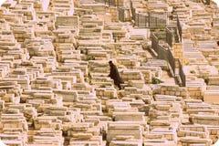 Un hombre en la muchedumbre Imagen de archivo