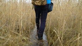 Un hombre en las botas de goma con una mochila está en un rastro del agua a través de las cañas en el lago almacen de video
