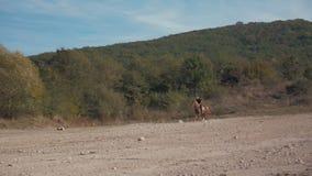 Un hombre en un caballo que galopa en las montañas almacen de metraje de vídeo