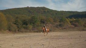 Un hombre en un caballo que galopa en las montañas metrajes