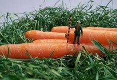 Un hombre en un campo de la zanahoria Fotografía de archivo