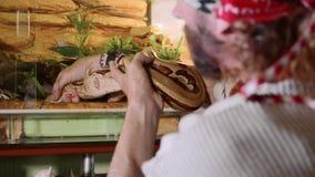 Un hombre está lentamente y toma cuidadosamente una serpiente del terrario, primer almacen de metraje de vídeo