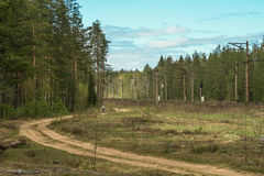 Un hombre joven camina abajo de una carretera nacional vieja a través de un bosque verde del pino Foto de archivo