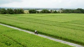 Un hombre joven que monta un interruptor en un camino del campo Camino hermoso de la monta?a viaje en la moto metrajes