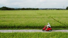 Un hombre joven que monta un interruptor en un camino del campo Camino hermoso de la monta?a viaje en la moto almacen de video