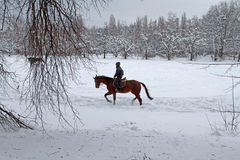 Un hombre joven que monta un caballo en un parque nevado Librado a caballo Imagen de archivo