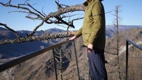 Un hombre joven se coloca encima de una montaña cerca de un árbol seco viejo, mira el panorama del valle y de las montañas almacen de video