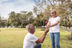 Un hombre mayor mayor dar a su esposa una flor como regalo de la sorpresa el día del valentines' fotos de archivo libres de regalías