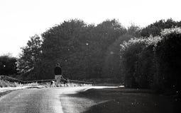 Un hombre mayor que camina sus perros en blanco y negro foto de archivo